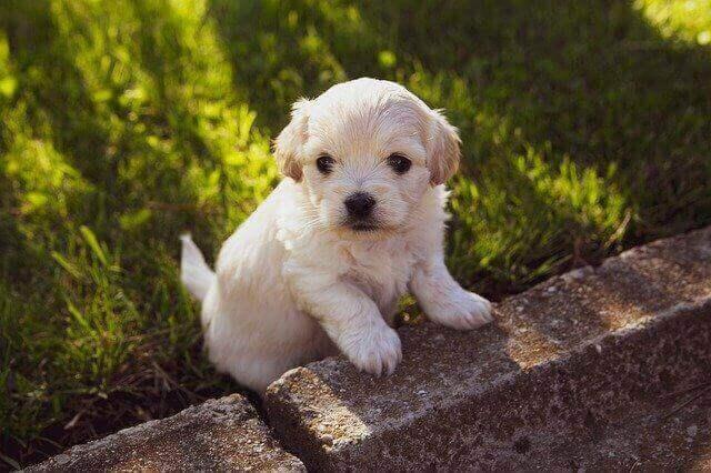 Puppy in de tuin